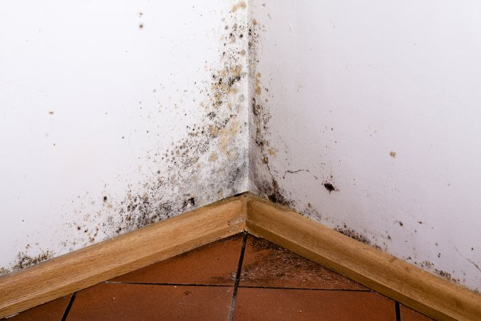 Mold Testing & Remediation in North Royalton Ohio